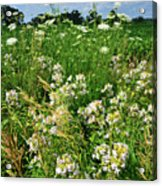 Bouquet Of Wildflowers Along Country Road In Mchenry County Acrylic Print