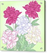 Bouquet With White And Pink Peonies.spring Acrylic Print