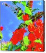Bougainvillea Glow Acrylic Print