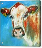 Bovine On Blue  Acrylic Print
