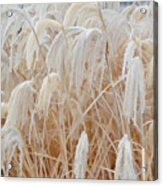 Bowing To Snow Acrylic Print