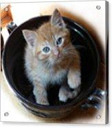 Bowlful Of Kitten Acrylic Print