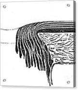 Bowmans Membrane, Retinal Layers, 1842 Acrylic Print