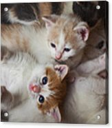 Box Full Of Kittens Acrylic Print