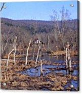 Boxely Swamp2 Acrylic Print