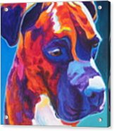 Boxer - Jax Acrylic Print by Alicia VanNoy Call
