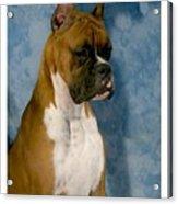 Boxer 151 Acrylic Print