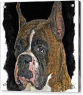 Boxer Acrylic Print by Larry Linton