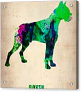Boxer Poster Acrylic Print by Naxart Studio