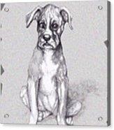 Boxer Pup Acrylic Print
