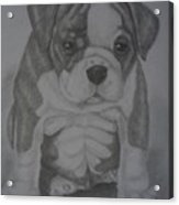 Boxer Puppy Acrylic Print by Ian Lennox