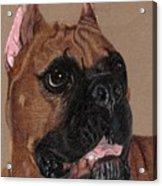Boxer Vignette Acrylic Print by Anita Putman