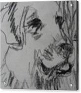 Boy And Dog Under Sky Acrylic Print