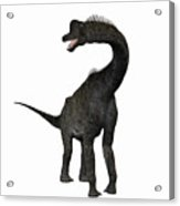 Brachiosaurus Acrylic Print