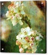 Bradford Pear 8932 Idp_2 Acrylic Print