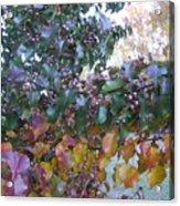 Bradford Pear Tree With Berries Acrylic Print