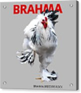 Brahma Breeders Rock Red Acrylic Print