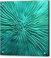 Brain Coral Acrylic Print