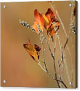 Branch Of Autumn Acrylic Print