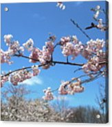 Branch Of Blossoms Acrylic Print
