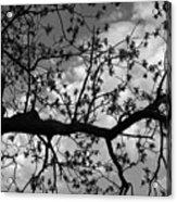 Branch Patterns Acrylic Print