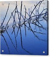Branch Reflections 484 Acrylic Print