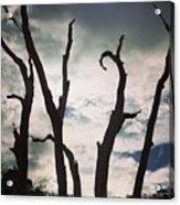 Branch Silouettes On Skeleton Beach Acrylic Print