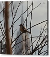 Branch With A View Acrylic Print
