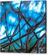 Branches 23 Acrylic Print