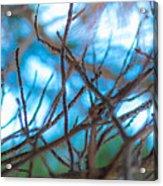 Branches 24 Acrylic Print