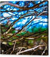 Branches 31 Acrylic Print