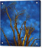 Branches Against Night Sky H Acrylic Print