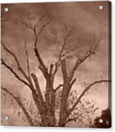 Branches Against Sepia Sky H   Acrylic Print