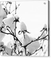 Branches Acrylic Print