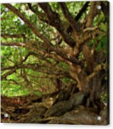 Branches And Roots Acrylic Print by James Eddy