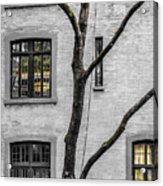 Branches And Windows Acrylic Print