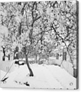 Branches In Snow Acrylic Print