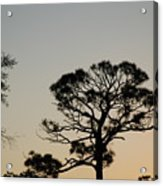 Branches In The Sunset Acrylic Print