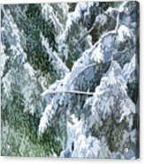 Branches In Winter Season With Fresh Fallen Snow Acrylic Print