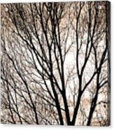 Branches Silhouettes Mono Tone Acrylic Print