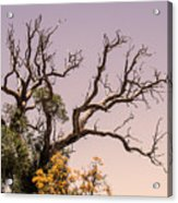 Branching Out Acrylic Print