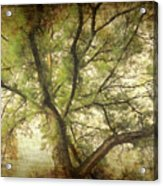 Branching Upward Acrylic Print