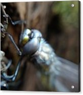 Brand New Dragon Fly Acrylic Print