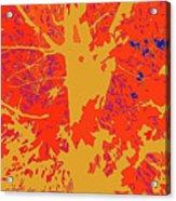 Brandywine  Maple Fall Colors 4 Acrylic Print