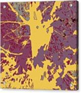 Brandywine  Maple Fall Colors 7 Acrylic Print