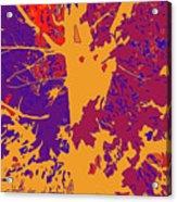 Brandywine  Maple Fall Colors 8 Acrylic Print