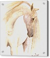 White Horse From The Wild Acrylic Print