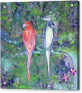 Brazilian Parrots Acrylic Print