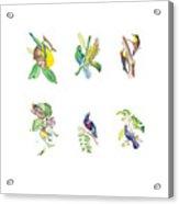 Brazilian Tropical Birds Acrylic Print