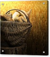 Breads And Wheat Cereal Crops Acrylic Print